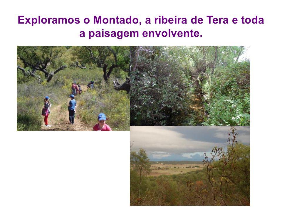 Exploramos o Montado, a ribeira de Tera e toda a paisagem envolvente.