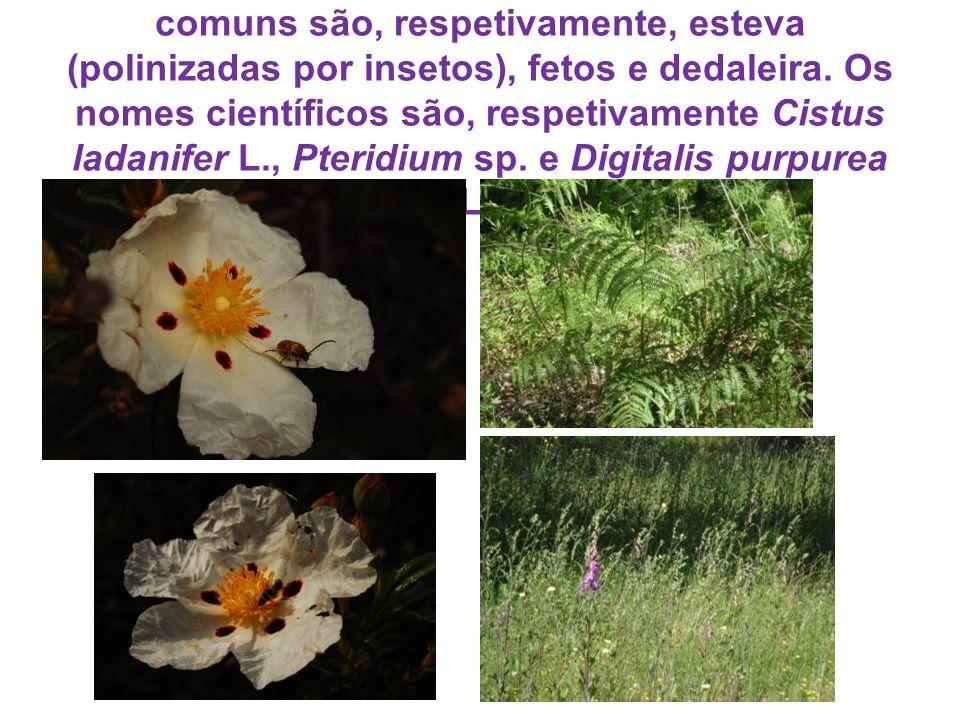 Muitas espécies de plantas, cujos nomes comuns são, respetivamente, esteva (polinizadas por insetos), fetos e dedaleira.