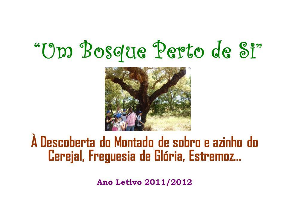 Um Bosque Perto de Si À Descoberta do Montado de sobro e azinho do Cerejal, Freguesia de Glória, Estremoz...