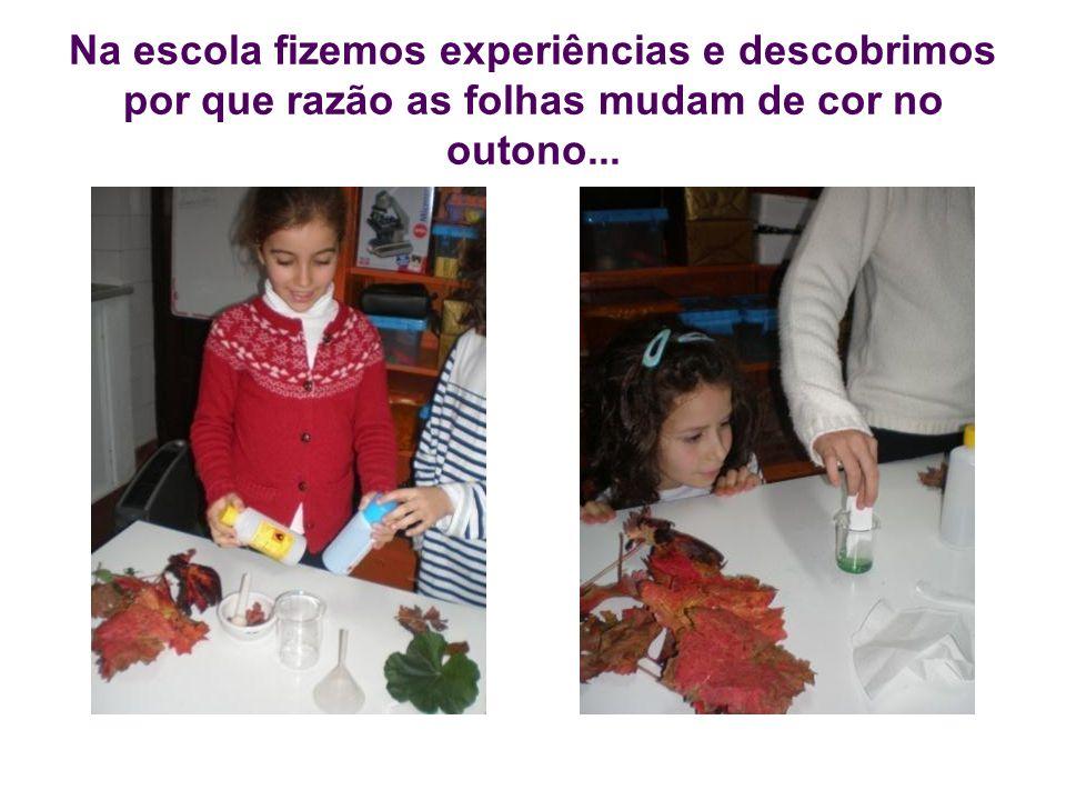 Na escola fizemos experiências e descobrimos por que razão as folhas mudam de cor no outono...