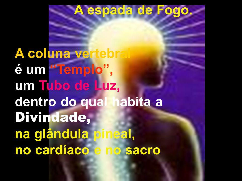 A espada de Fogo. A coluna vertebral. é um Templo , um Tubo de Luz, dentro do qual habita a Divindade,