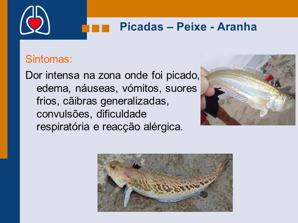 Picadas – Peixe - Aranha