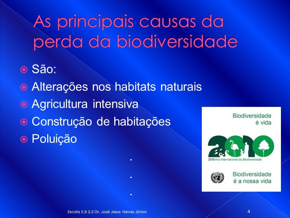 As principais causas da perda da biodiversidade