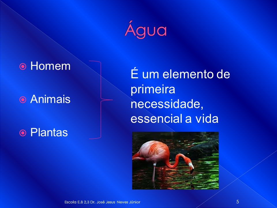 Água É um elemento de primeira necessidade, essencial a vida Homem