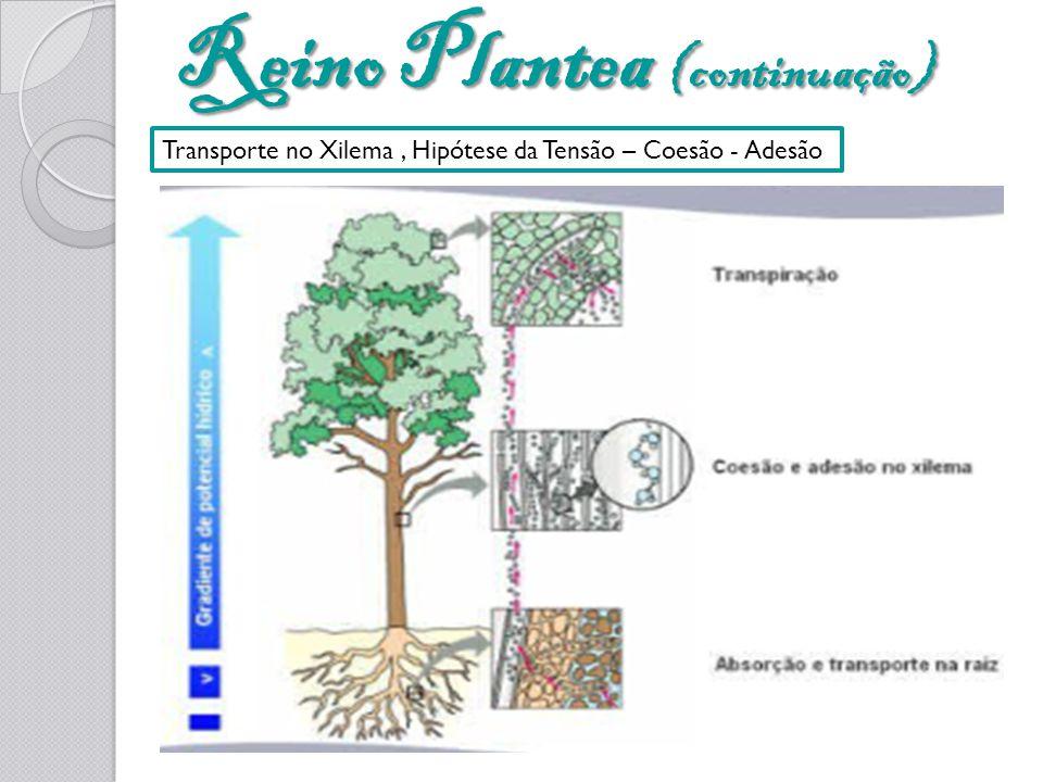 Reino Plantea (continuação)