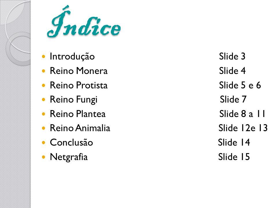 Índice Introdução Slide 3 Reino Monera Slide 4