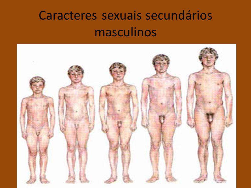 Caracteres sexuais secundários masculinos