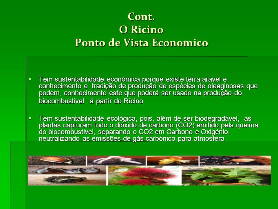 Cont. O Ricino Ponto de Vista Economico