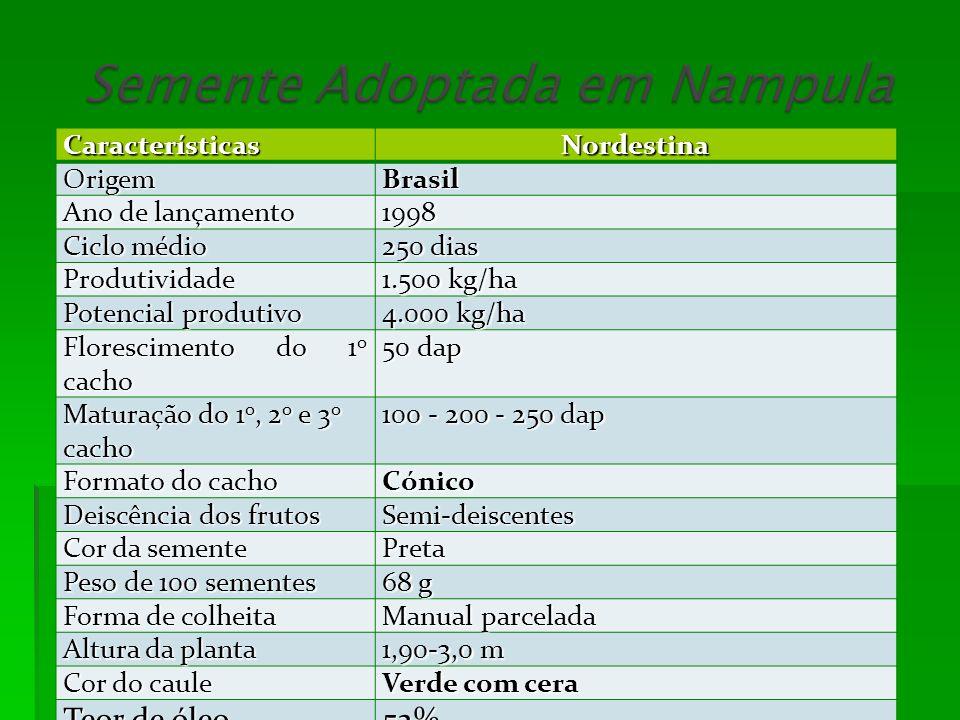 Teor de óleo 52% Características Nordestina Origem Brasil