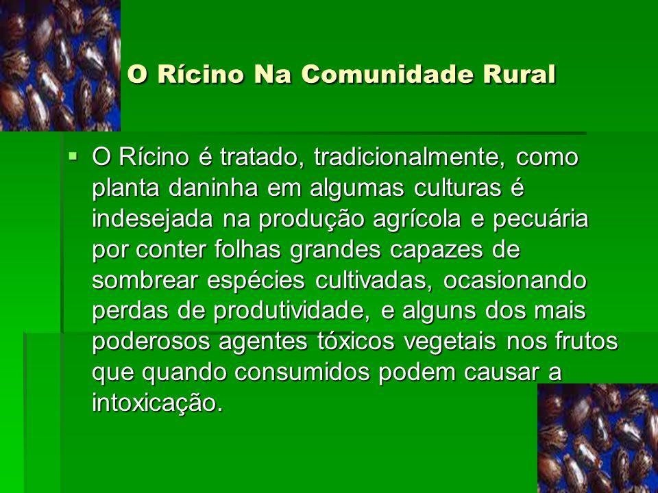 O Rícino Na Comunidade Rural