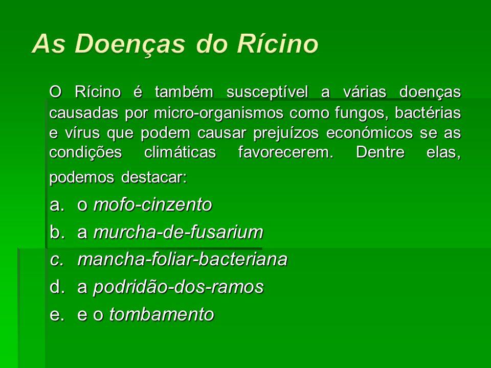 As Doenças do Rícino