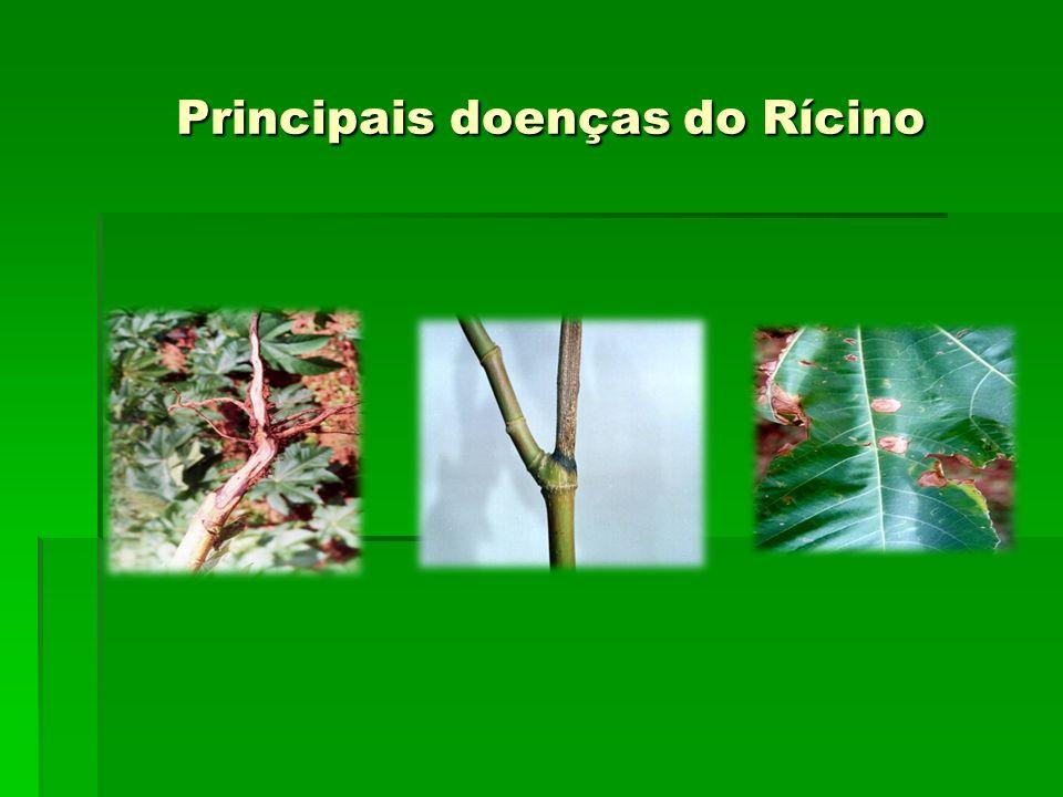 Principais doenças do Rícino
