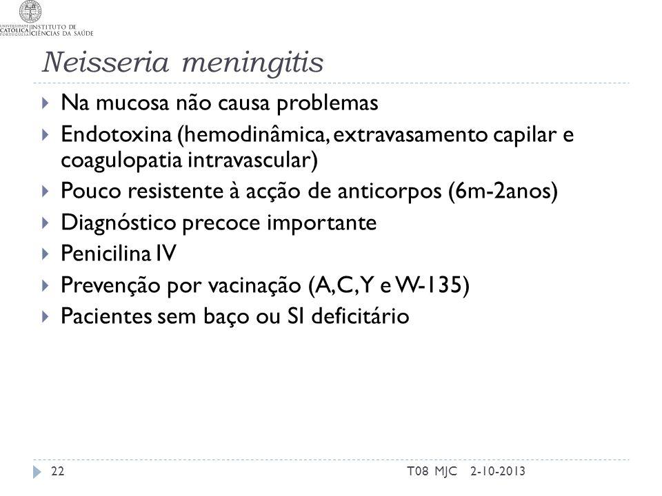 Neisseria meningitis Na mucosa não causa problemas
