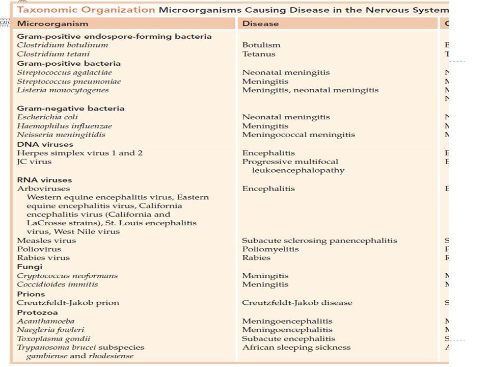 Microrganismos envolvidos em infeções do Sistema Nervoso