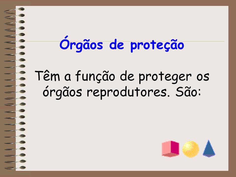 Órgãos de proteção Têm a função de proteger os órgãos reprodutores