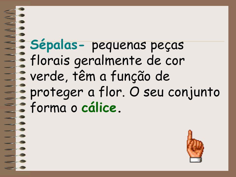 Sépalas- pequenas peças florais geralmente de cor verde, têm a função de proteger a flor.