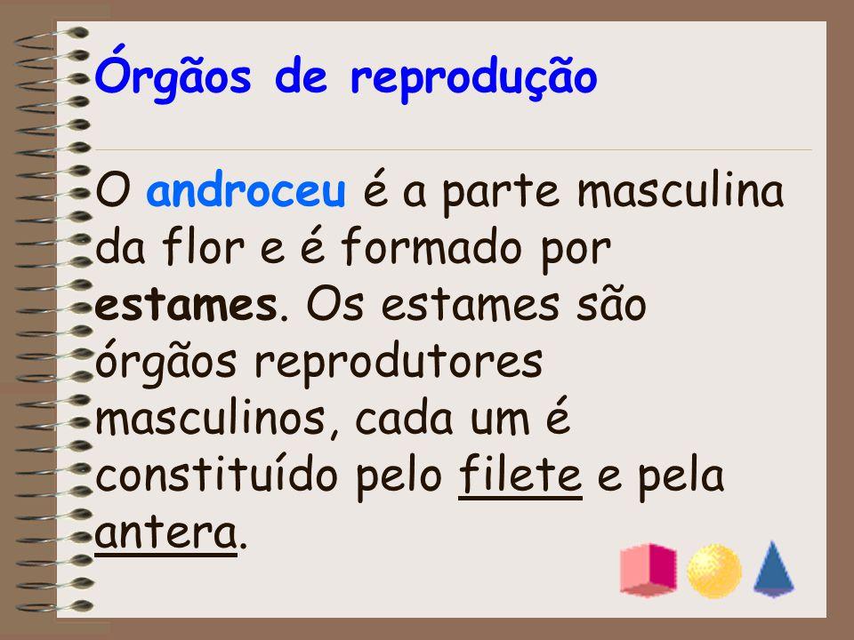 Órgãos de reprodução O androceu é a parte masculina da flor e é formado por estames.