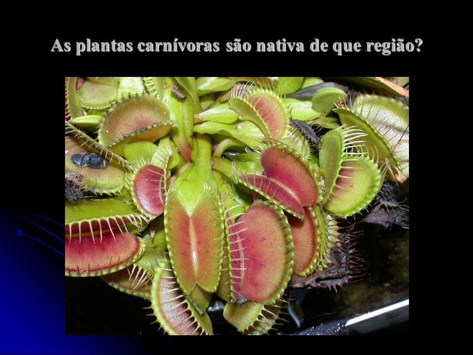 As plantas carnívoras são nativa de que região