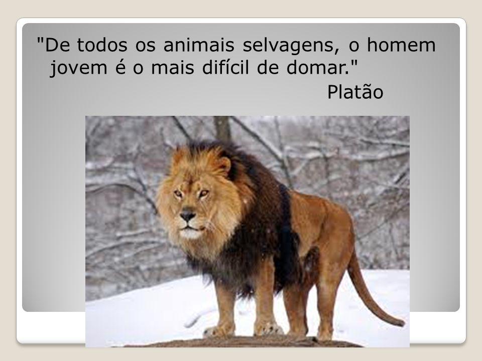 De todos os animais selvagens, o homem jovem é o mais difícil de domar. Platão