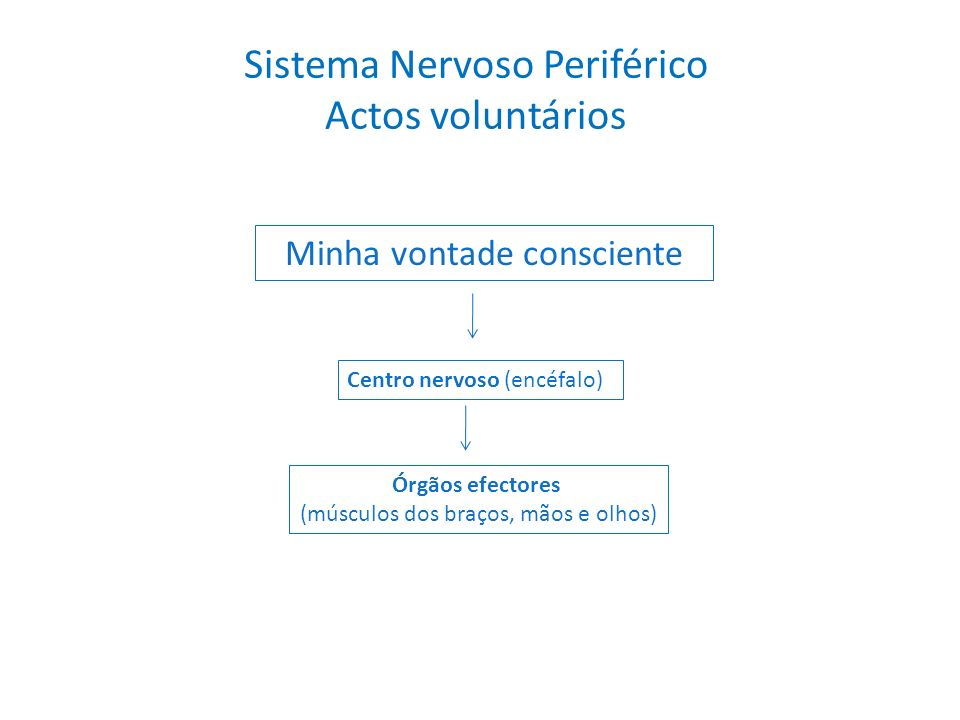 Sistema Nervoso Periférico Actos voluntários
