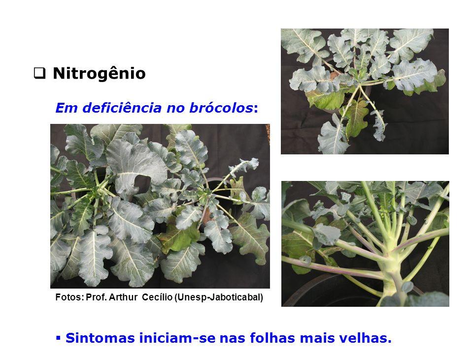Nitrogênio Em deficiência no brócolos: