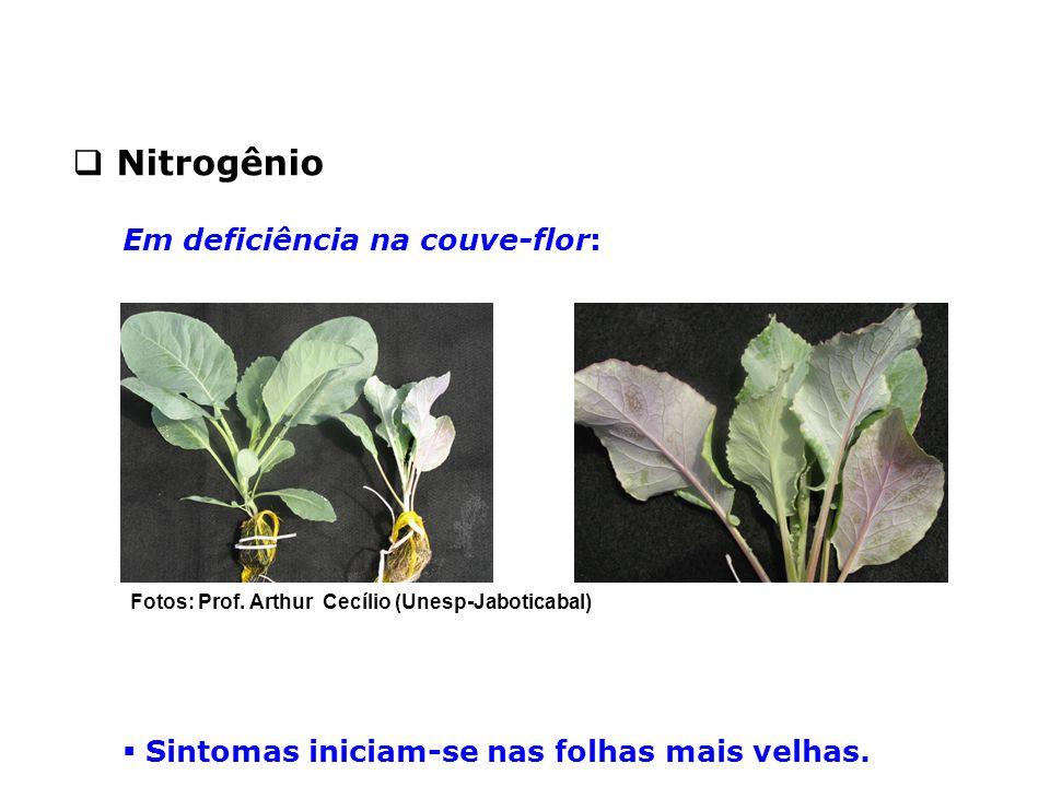 Nitrogênio Em deficiência na couve-flor: