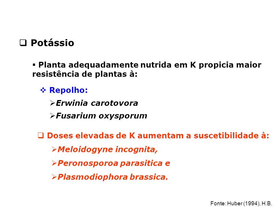 Potássio Planta adequadamente nutrida em K propicia maior resistência de plantas à: Repolho: Erwinia carotovora.
