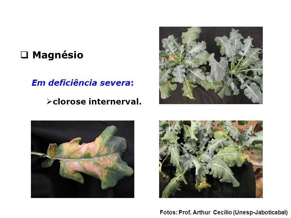 Magnésio Em deficiência severa: clorose internerval.