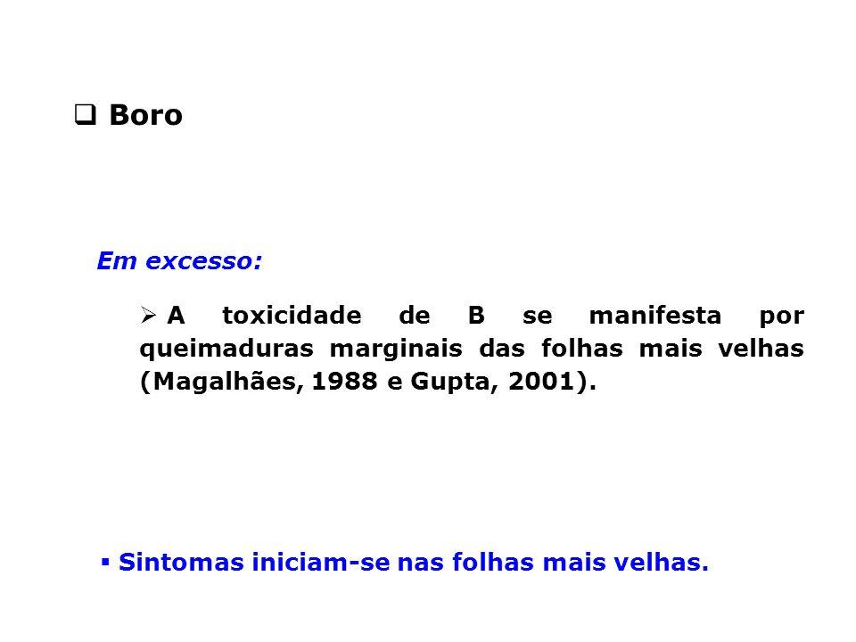 Boro Em excesso: A toxicidade de B se manifesta por queimaduras marginais das folhas mais velhas (Magalhães, 1988 e Gupta, 2001).