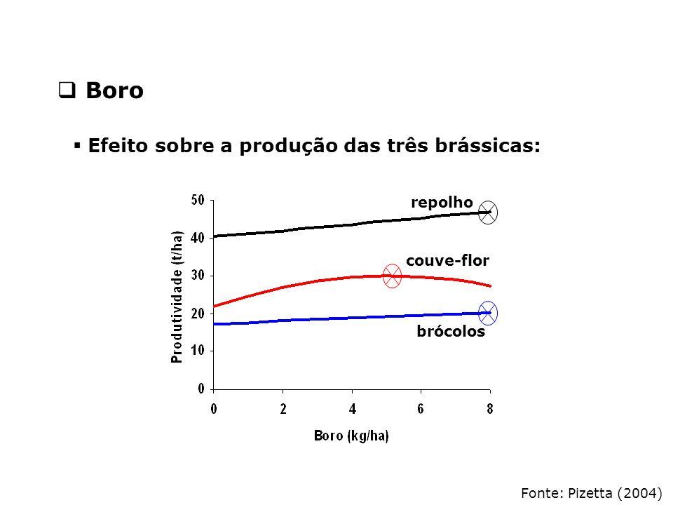 Boro Efeito sobre a produção das três brássicas: repolho couve-flor