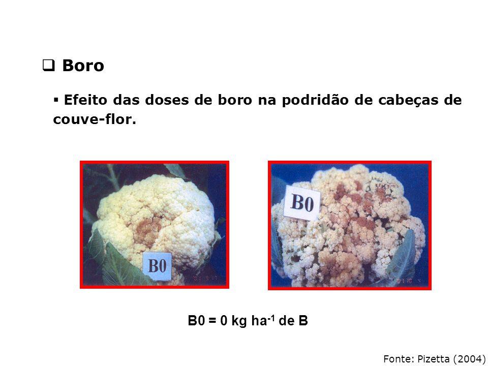 Boro Efeito das doses de boro na podridão de cabeças de couve-flor.