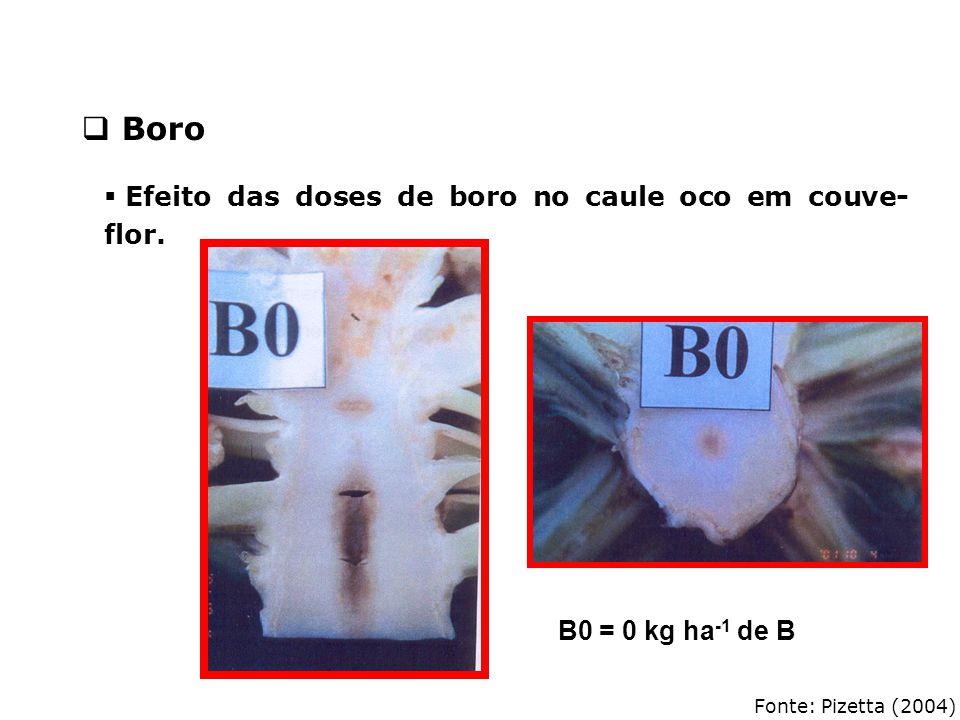 Boro Efeito das doses de boro no caule oco em couve-flor.