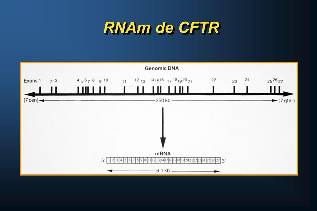 RNAm de CFTR