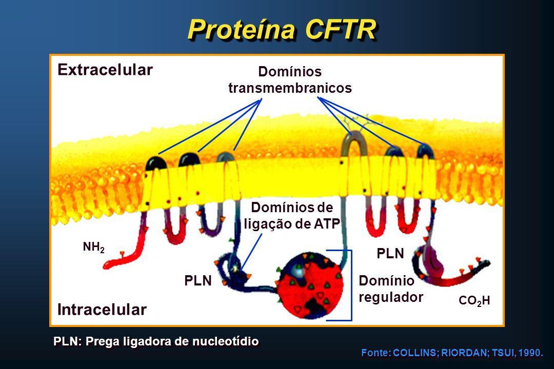 Proteína CFTR Extracelular Intracelular PLN Domínios de ligação de ATP