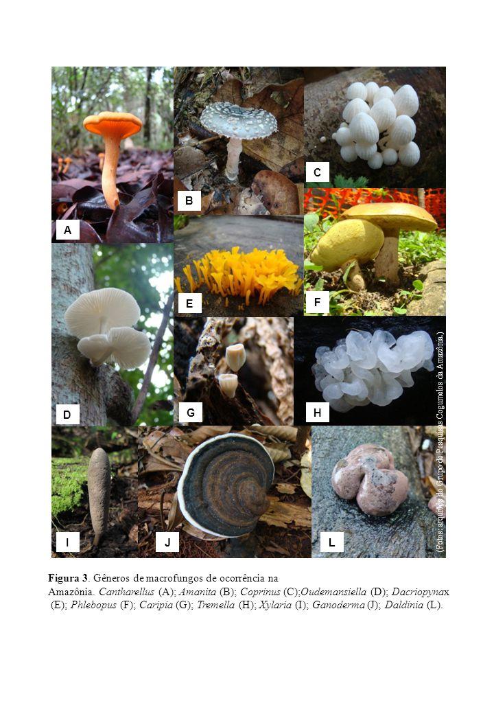 A B. C. D. E. F. G. H. I. J. L. (Fotos: arquivos do Grupo de Pesquisas Cogumelos da Amazônia.)