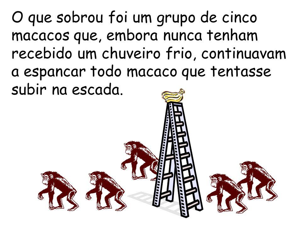 O que sobrou foi um grupo de cinco macacos que, embora nunca tenham recebido um chuveiro frio, continuavam a espancar todo macaco que tentasse subir na escada.