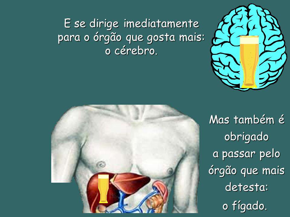E se dirige imediatamente para o órgão que gosta mais: o cérebro.