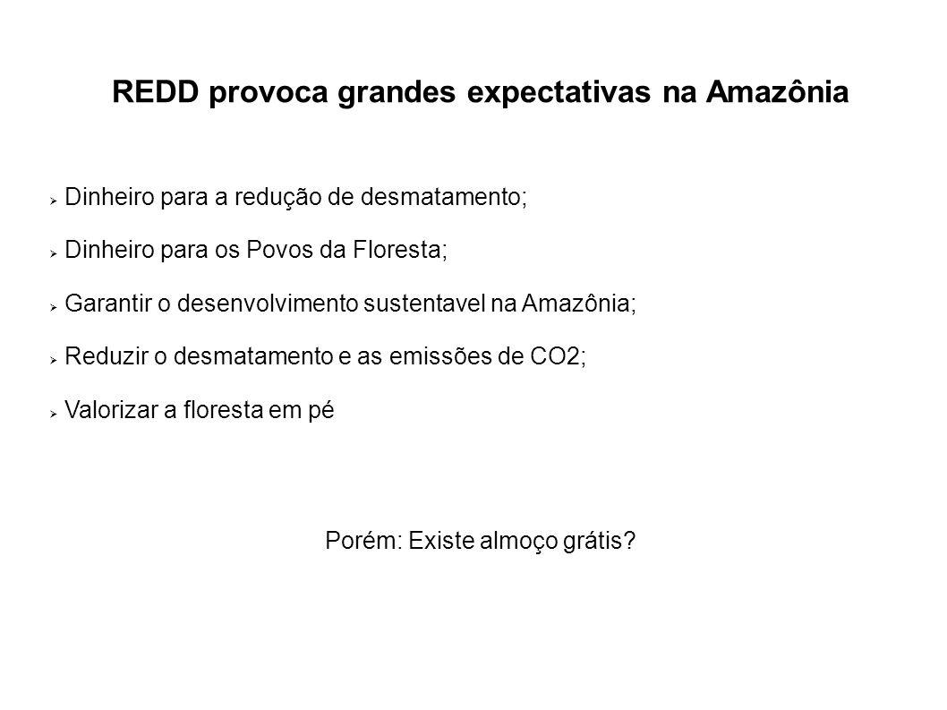 REDD provoca grandes expectativas na Amazônia