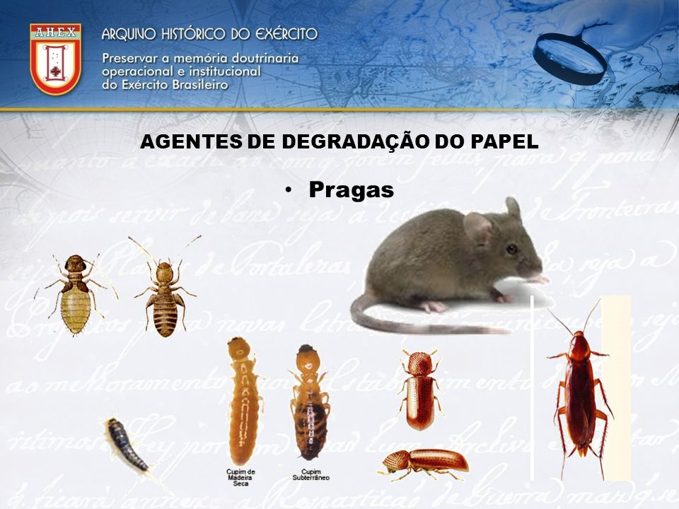 AGENTES DE DEGRADAÇÃO DO PAPEL