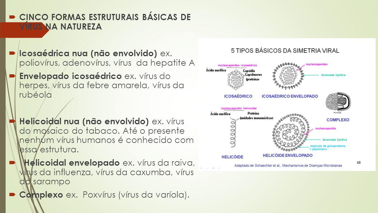 CINCO FORMAS ESTRUTURAIS BÁSICAS DE VÍRUS NA NATUREZA