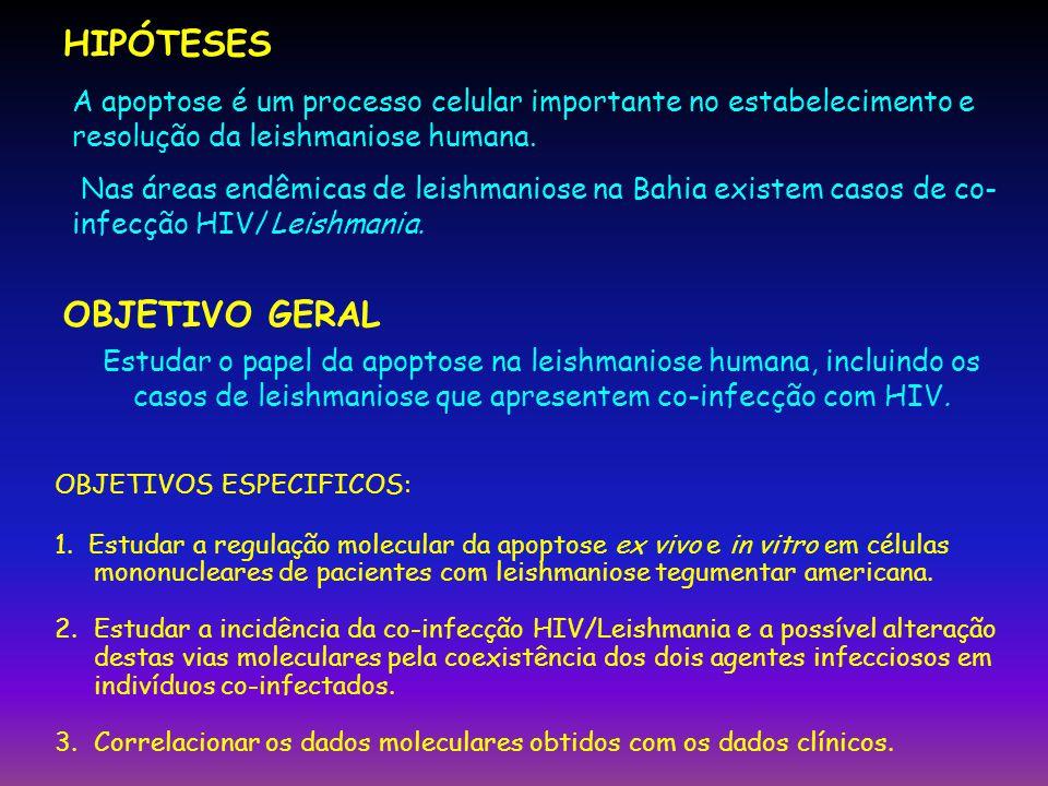 HIPÓTESES OBJETIVO GERAL