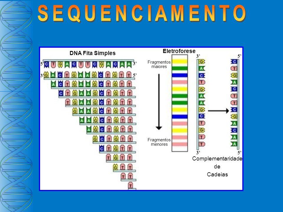SEQUENCIAMENTO Eletroforese DNA Fita Simples Complementaridade de