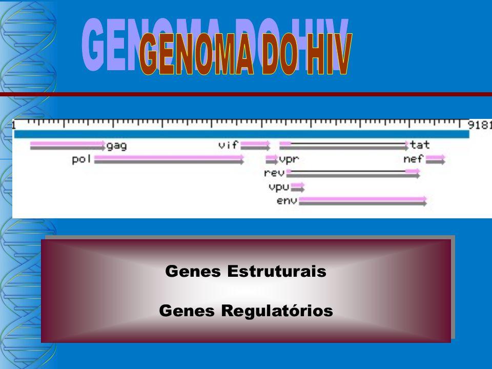 GENOMA DO HIV Genes Estruturais Genes Regulatórios