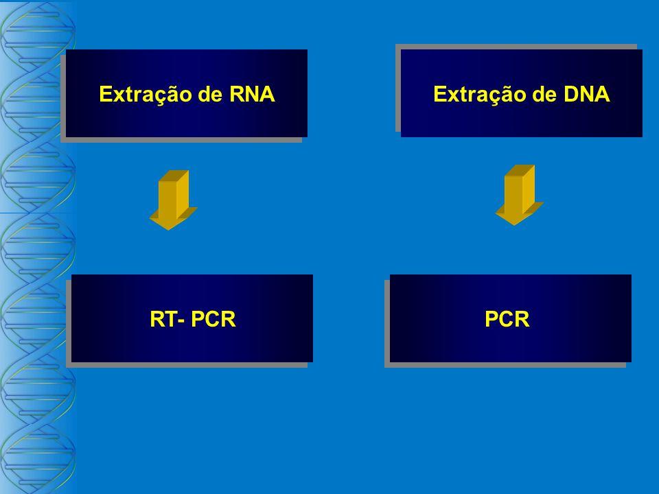 Extração de RNA RT- PCR Extração de DNA PCR