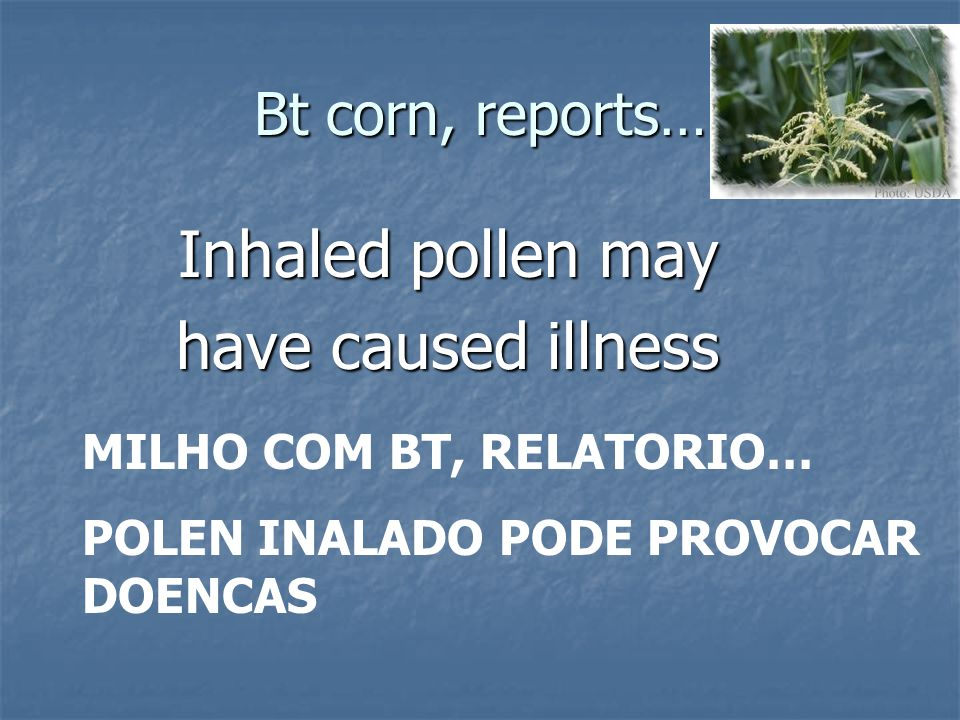 Inhaled pollen may have caused illness Bt corn, reports…