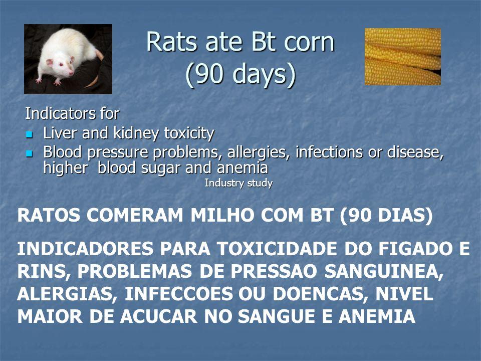 Rats ate Bt corn (90 days) RATOS COMERAM MILHO COM BT (90 DIAS)