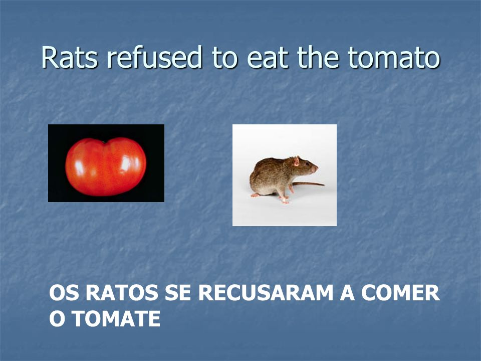 Rats refused to eat the tomato