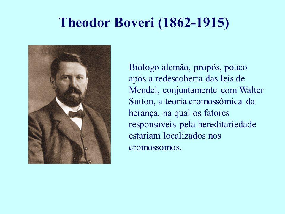 Theodor Boveri (1862-1915)