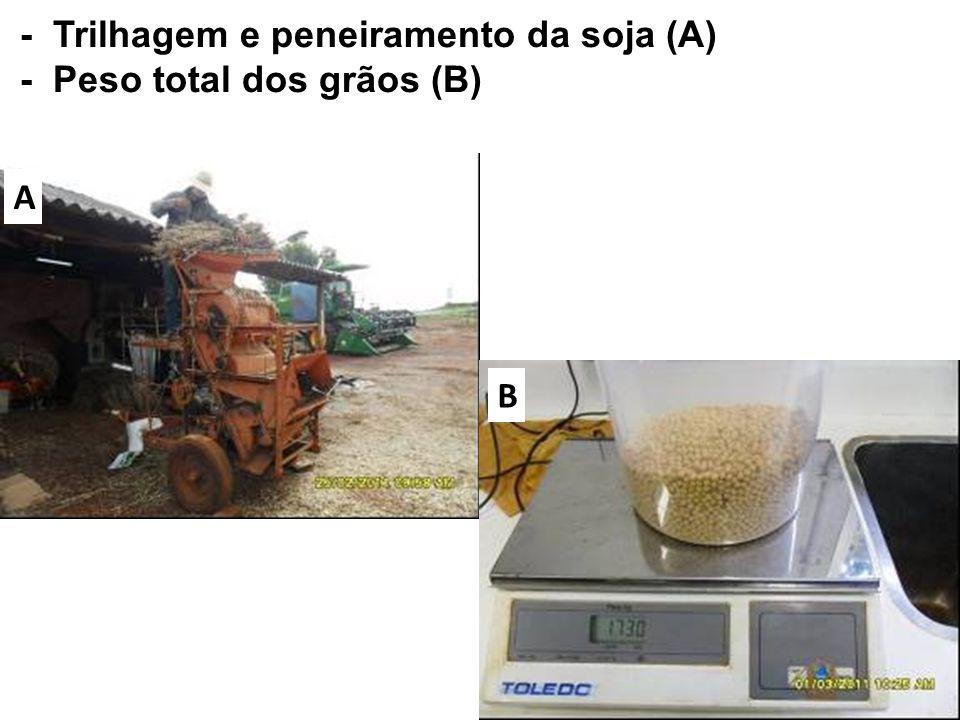 - Trilhagem e peneiramento da soja (A) - Peso total dos grãos (B)