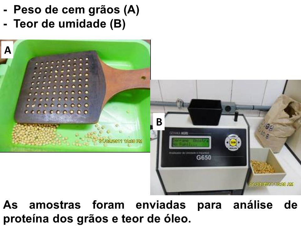 - Peso de cem grãos (A) - Teor de umidade (B)